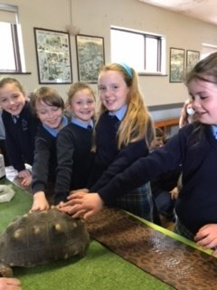Visit from the reptile zoo!
